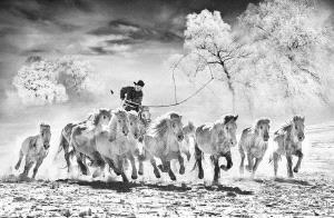SPP HM Ribbons - Arnaldo Paulo Che (Hong Kong) <br /> Horse Looping 3