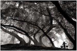 SPP HM Ribbons - Thomas Lang (USA) <br /> Foggy  Morning Work