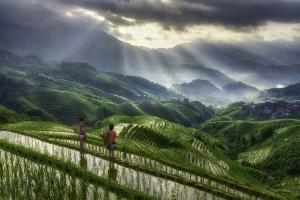 SPP HM Ribbons - Min Tan (Malaysia) <br /> Longji Farmers