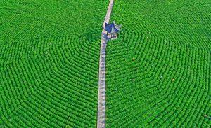 SPP HM Ribbons - Wei Ye (China)